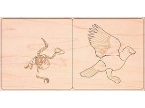 Bird anatomy zoology animal puzzle montessori for laser cut