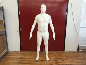 Life-Size Body Model