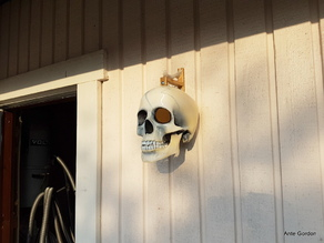 Bone bracket for the Skull bird house