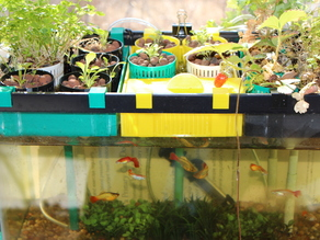 10 Gallon Aquaponics System