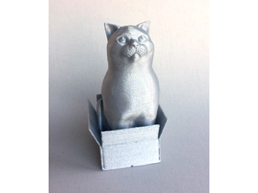 Schrodinky: British Shorthair Cat Sitting In A Box(single extrusion version)