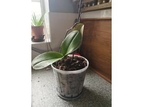 17cm pot for Orchid