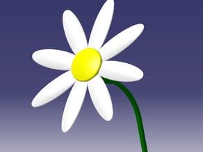 Daisy - Marguerite