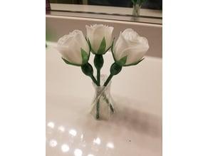 Rose Sepal