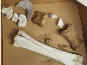 Horse Leg Bone