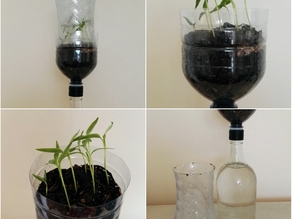 Passive hydroponic system for seedlings
