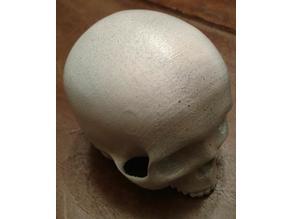 Skull dice tumbler
