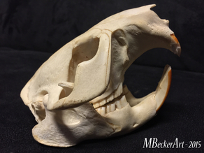 beaver skull scan