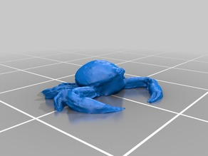 Mottled Purse Crab