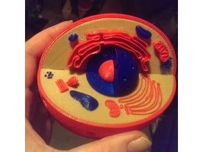 multicolored cell