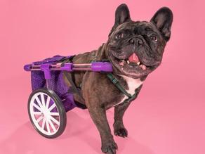 FiGo - Dog Wheelchair