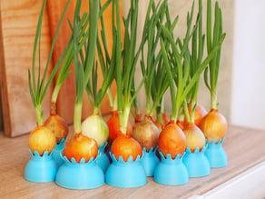 Onion pots
