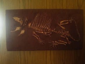 Baby Dimetrodon Skeleton
