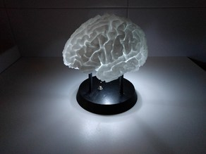 LED-Lit Brain with battery holder