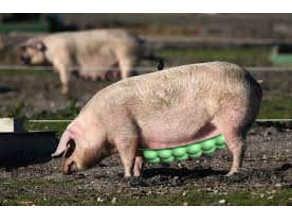 mrs. pill - piggy's bra / (plister) -Zucht & Ordnung