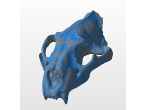 Panther Skull (3D Scan)
