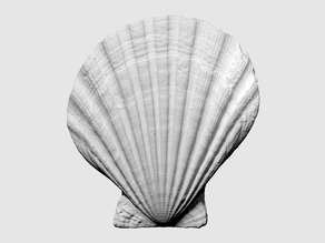 3D scan of a scallop