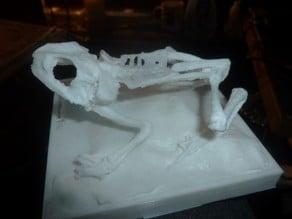 frog skeleton (Remix from lordlilapause )