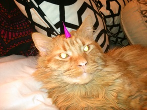Turn your cat into a Unikitty. Or Caticorn.