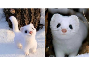 Snow-White Weasel