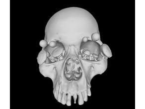 Growing Skull with Several Mushroom Models
