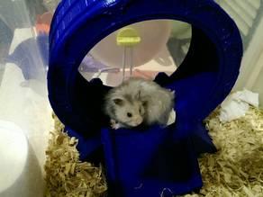 Stargate Hamster Wheel