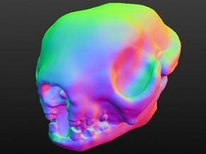 3 toed sloth skull