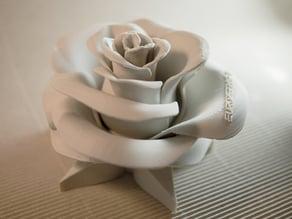 Rose - real flower
