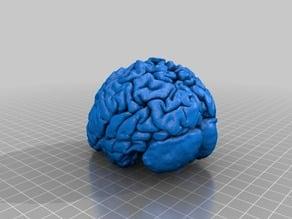 Human Brain Remix