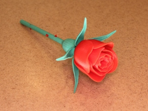 Rose with Stem & Thorns & Sepals & Hip for Valentine's Day