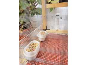 Bird feeder - Comedero para pájaros
