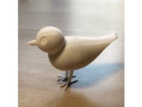 Baxter the bird