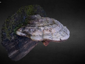 Large white mushroom scan